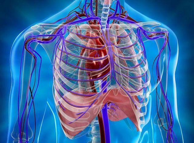 МРТ грудной клетки и средостения: что показывает?