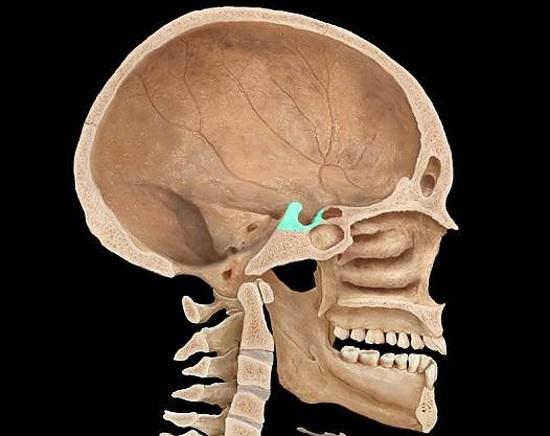 Рентген (рентгенография) турецкого седла – для чего делается?