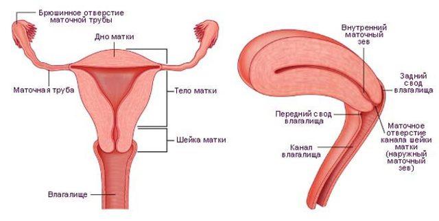 МРТ яичников, матки и её шейки