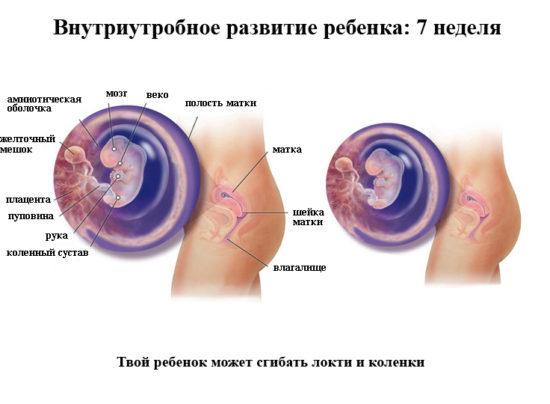 6 неделя беременности на УЗИ: как делают, что покажет?