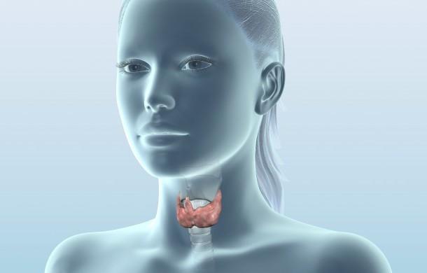 Что показывает УЗИ щитовидной железы?