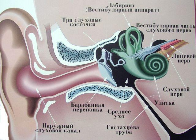 Рентгенография височных костей и уха по Шюллеру, Майеру и Стенверсу