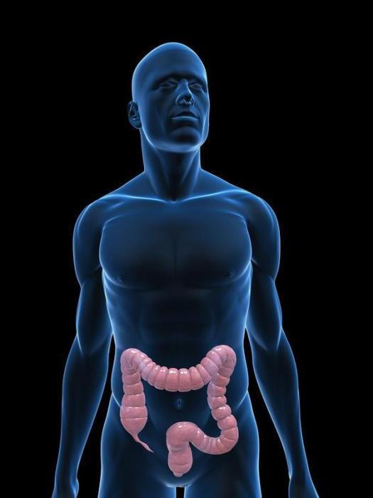 Когда надо делать колоноскопию кишечника?