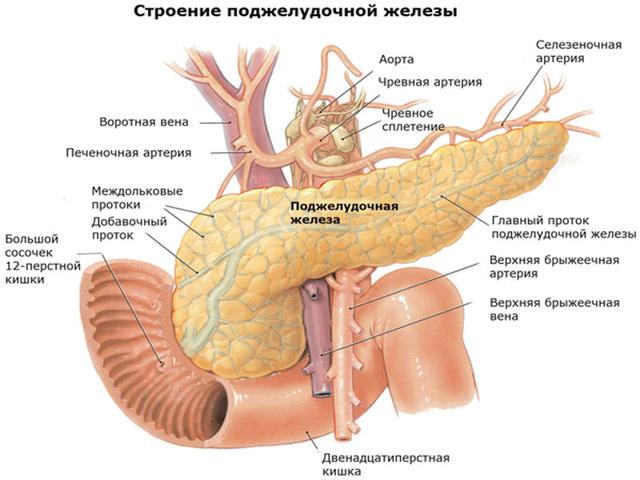 МРТ поджелудочной железы: показания