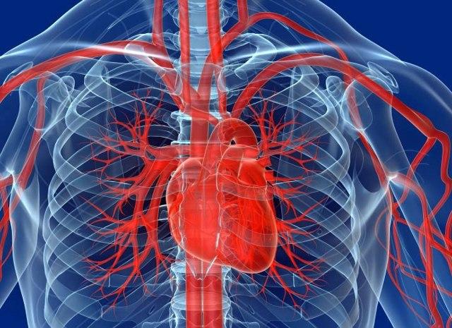 МРТ сердца с контрастированием: что показывает?