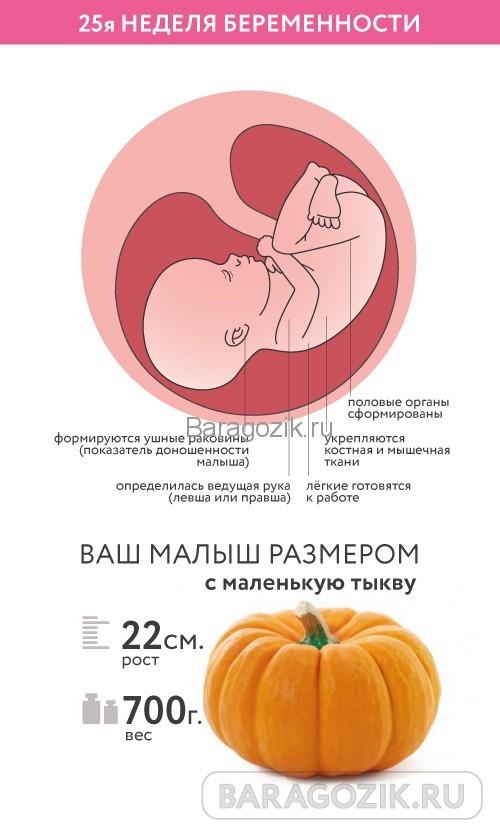 УЗИ на 25 неделе беременности