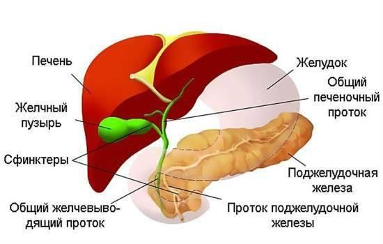 МРТ желчного пузыря и протоков