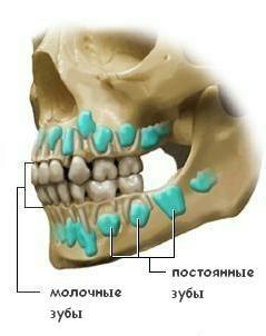Рентген детской челюсти и молочных зубов
