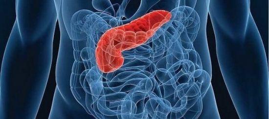 УЗИ поджелудочной железы: норма и патология