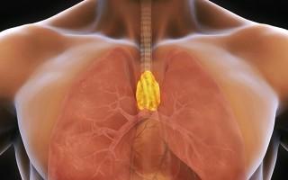 УЗИ вилочковой железы у детей и взрослых: норма и патология