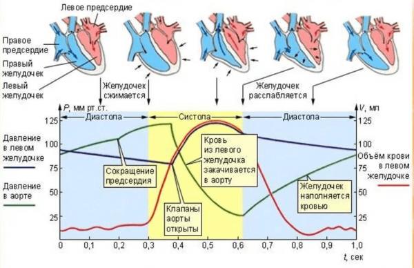 Допплерография плода при беременности