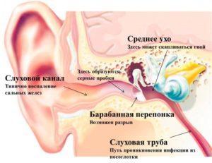 УЗИ уха: когда необходимо обследование?