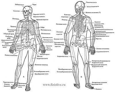 Соматоскопия: показания, проведение, результаты и их оценка