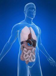 МРТ брюшной полости - что показывает?