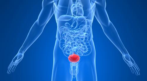 МРТ мочевого пузыря: что показывает, подготовка