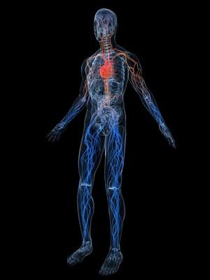 КТ-ангиография сосудов нижних конечностей: подготовка, проведение, результаты