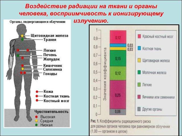 Рентген или КТ: основные отличия, что лучше и безопаснее?