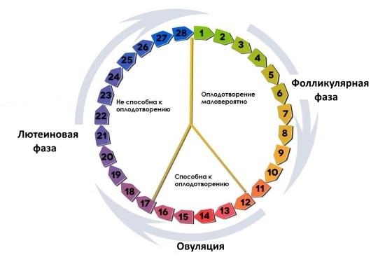 Когда лучше делать кольпоскопию, на какой день менструального цикла?