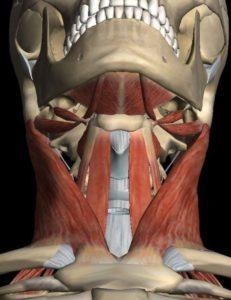 МРТ горла и гортани: что показывает?